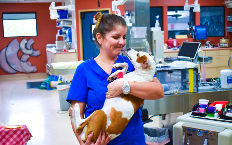 Providing veterinarian services to a dog